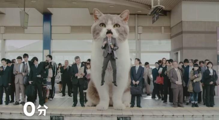 Fit's giant cat
