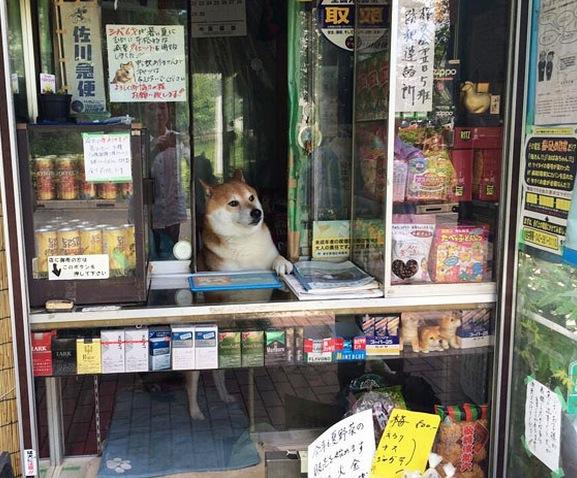 shopkeeper dog