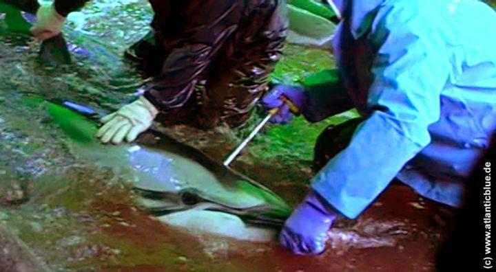 New dolphin killing methode