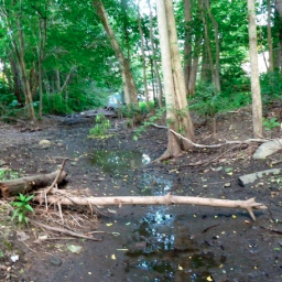 Once thought to be dead, the King Street Brook  makes a dramatic comeback