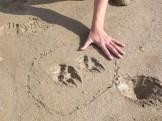 traces-loup