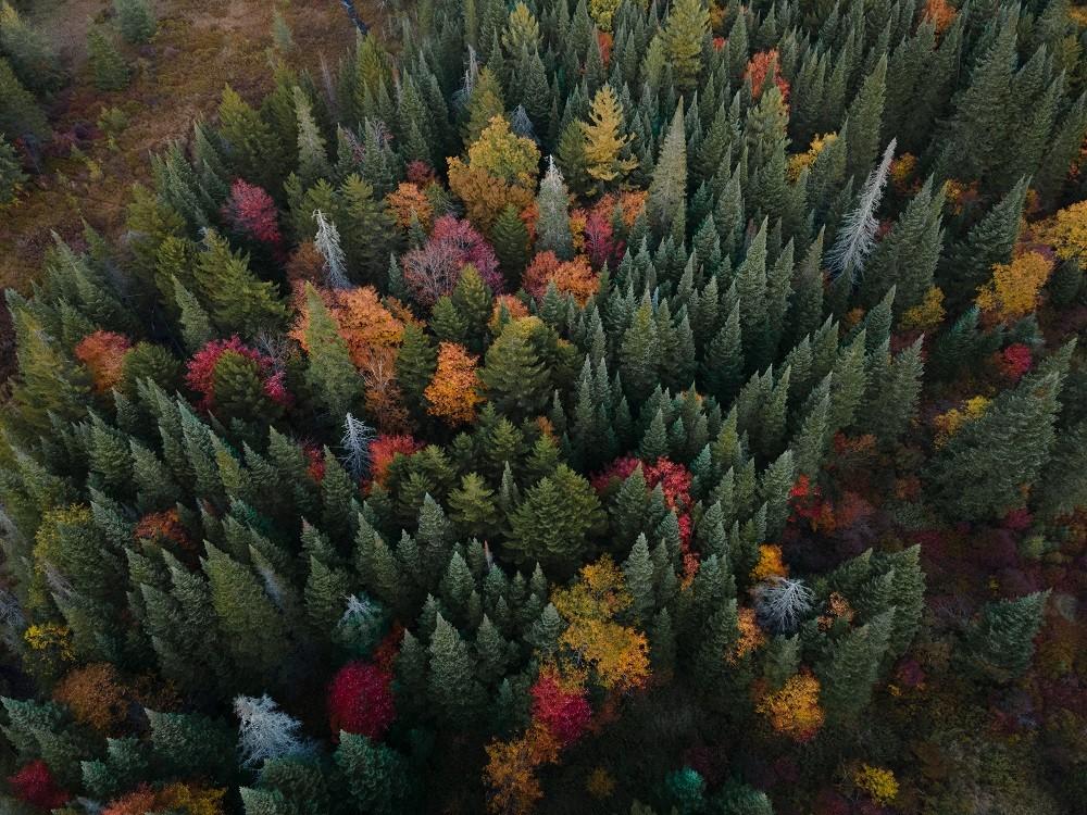 Adirondack Trees by Jeremy Ackerman