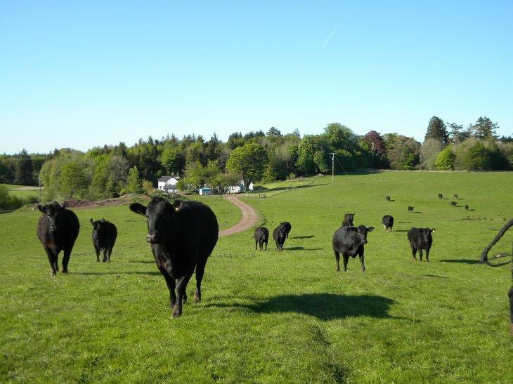 Animal Wallpaper For Home Real Farm Food Kirkwood Real Farm Holidays