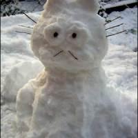 Kardan kedi