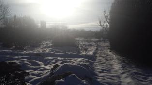 Neujahr 2015 Impressionen aus dem Kirschbaum