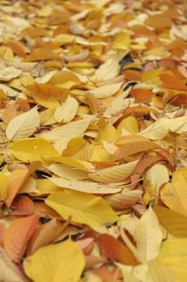 Herbst_DSC8525