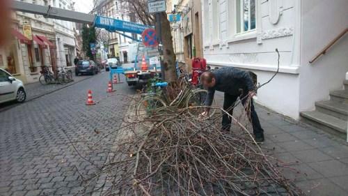 Baumschnitt Teil Ii Kirschbluete Bonn