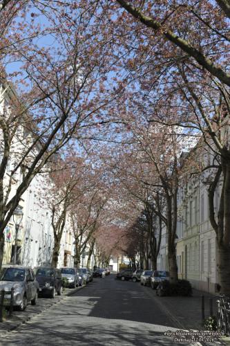 kirschblütenliveticker-dienstag-12.4.16