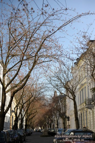 kirschblütenliveticker-Samstag-09.04.16