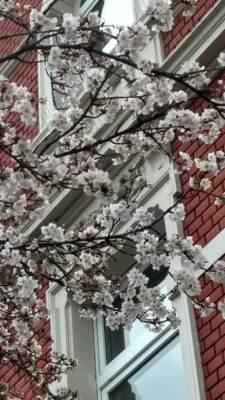 weisse Blüte in der Dorotheenstraße