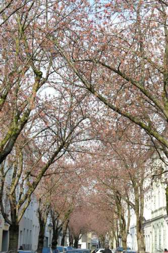Wetter bonn freitag | Wetter Bonn: 7
