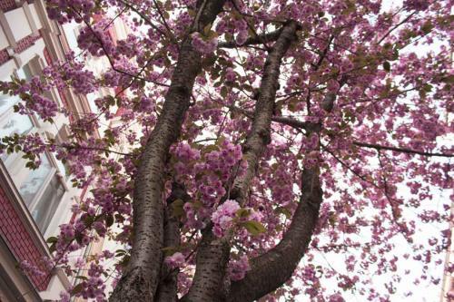 199-2105-Wett-S.Yuqing-Frühlingshimme-2v3