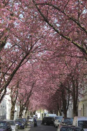 288-2015-Wett-k.Geis-geis-kathrin@web.de-Altstadt1-2v3