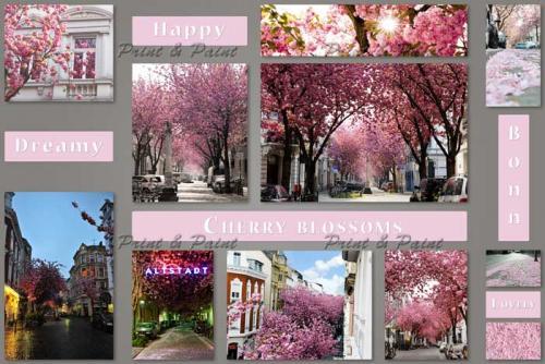 Bonn-Kirschbluete-Altstadt-Collage