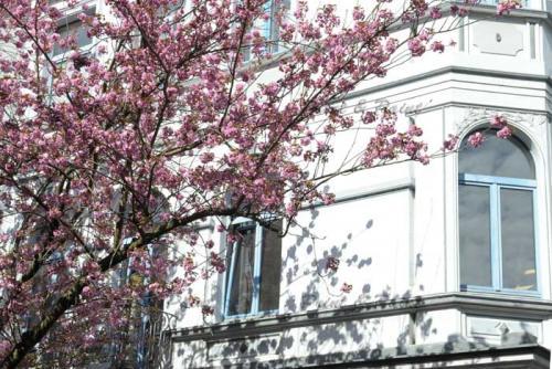 Kirschbluete-Bonn-printandpaint-7602