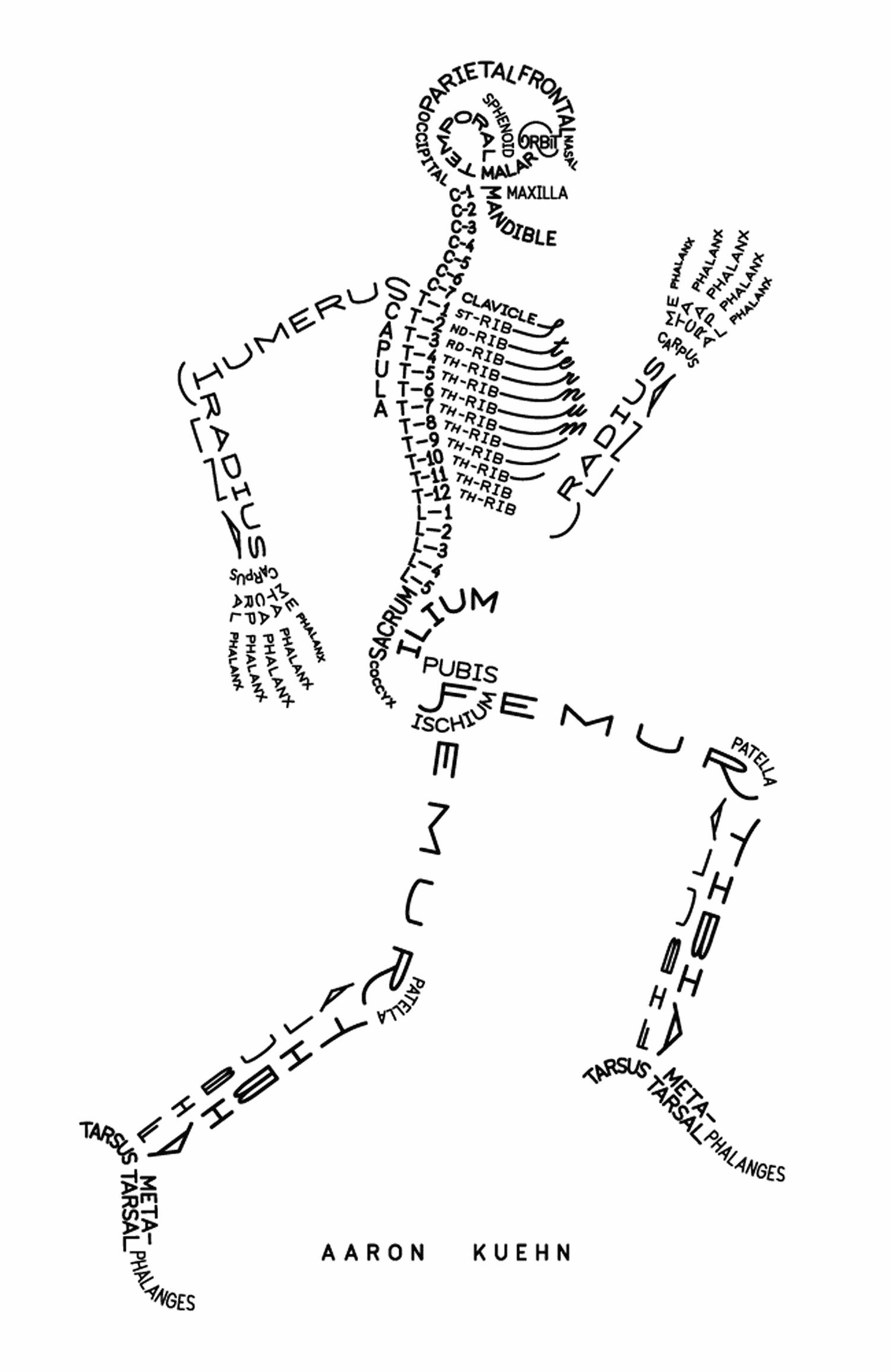 fun skeleton diagram