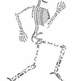 cartoons daily ease diagrams fun skeleton diagram fun skull diagram [ 1500 x 2308 Pixel ]
