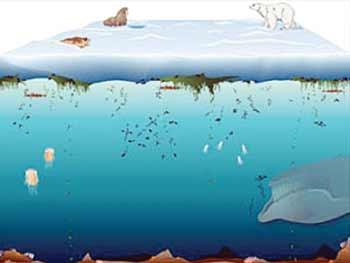 ecosystem-3