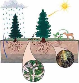 ecosystem-4