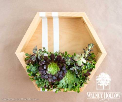 hexagon-succulent-planter