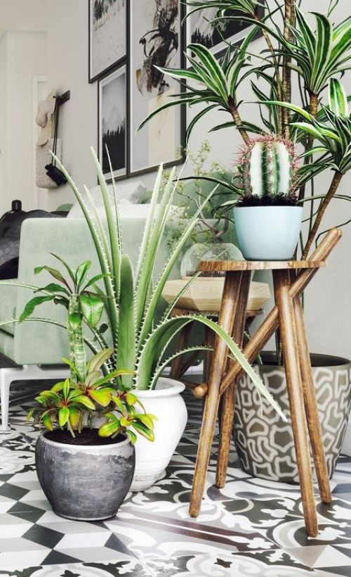 succulent plant decor idea 12
