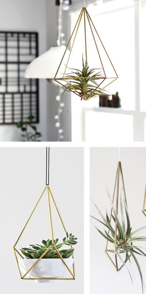 succulent plant decor idea 4