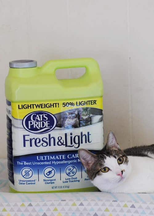 Just buy a green jug of @catspride Fresh & Light®! That's it. For every green jug purchased, a POUND of litter will be added to the total amount to be donated. #ad #LitterForGood #CatsPride
