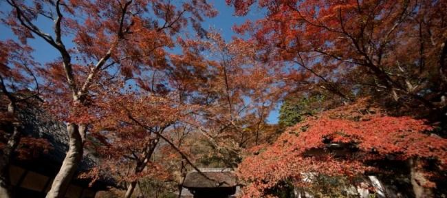 [Photolog] 2011年12月 鎌倉の紅葉