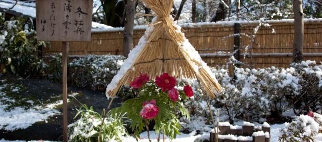 [Photolog] 2012年1月 上野東照宮の牡丹