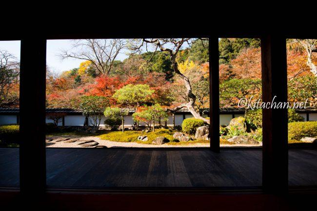[Photolog] 2016年11月 奈良の紅葉