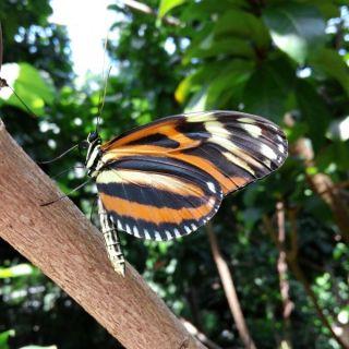 Cockrell Butterfly Center