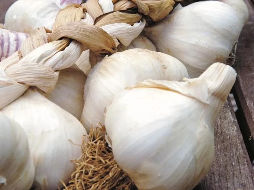 Close shot of garlic bulbs.