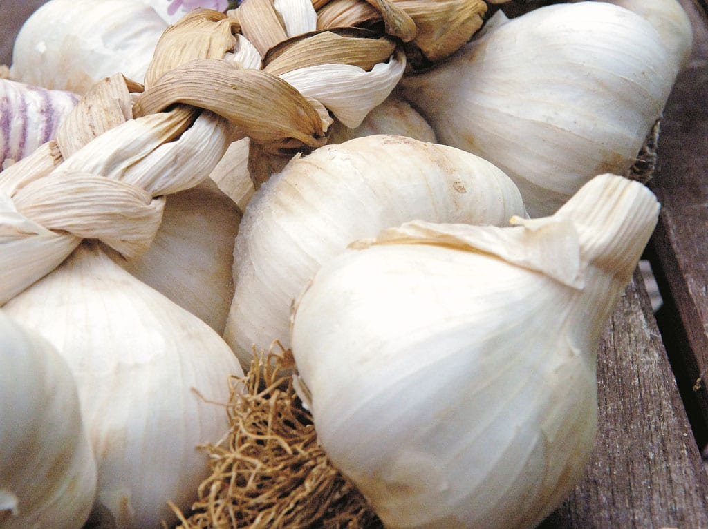 How To Grow Garlic Kitchen Garden