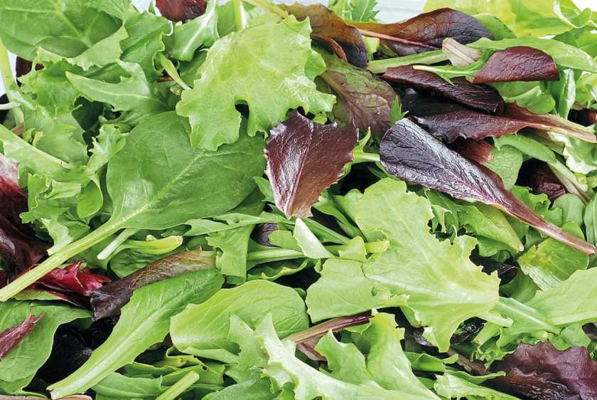 Close up of a mixture of salad leaves.