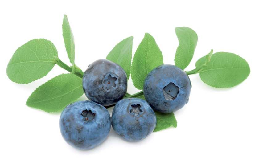A few blueberries on a white background.