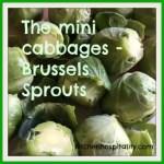 mini cabbages