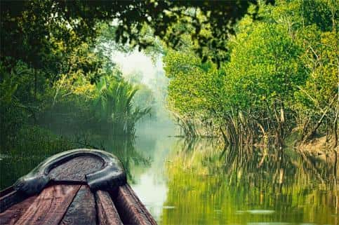 Pic of the Sundarbans, Bay of Bengal.