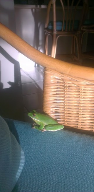 Kiteboarding Cairns - Green Frog in the House (3)