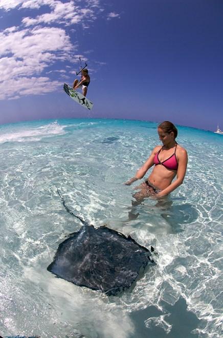Kite stingray - Cayman Islands