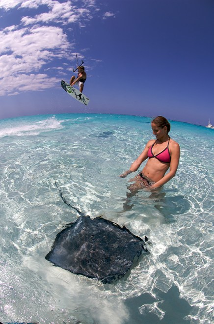 Kite stingray - Cayman Islands