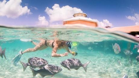 Marine life - Cayman Islands
