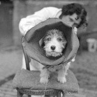 Vintage Cone Of Shame