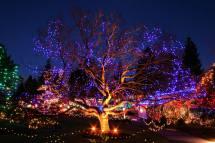 Van Dusen Festival of Lights