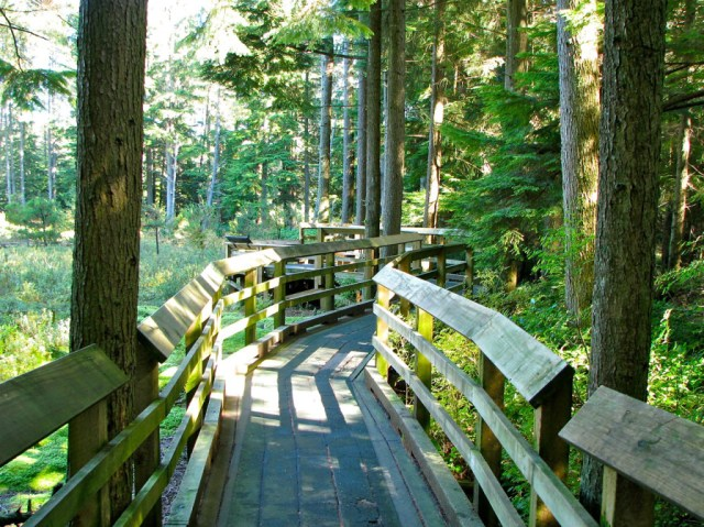 Pacific Spirit Park trail