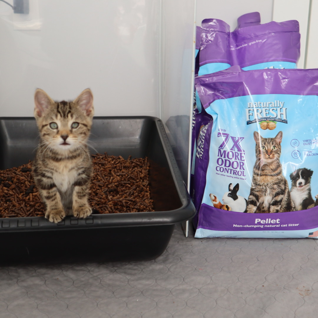 My favorite litter boxes for my foster kittens!