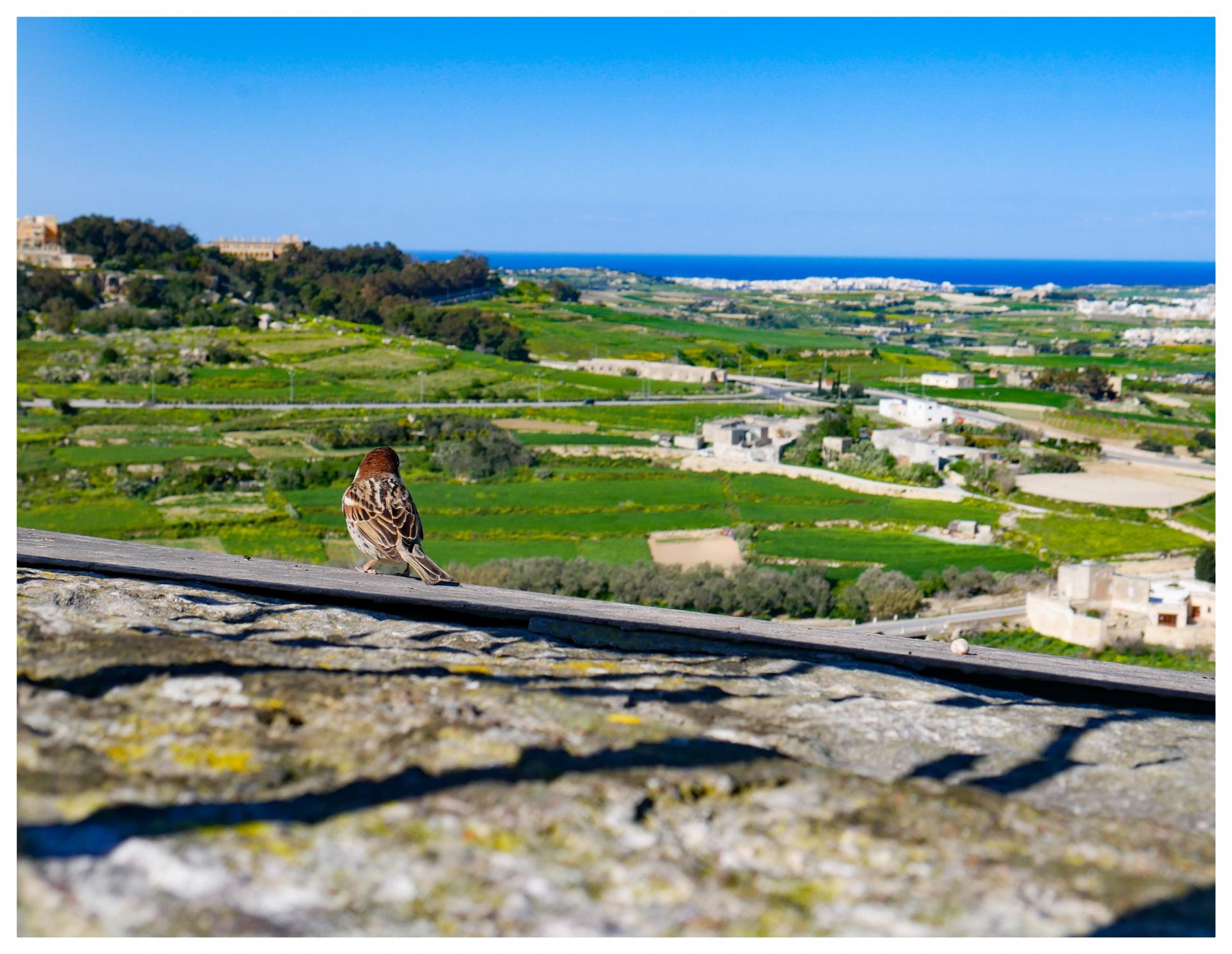 5 best places to eat and drink in Malta, including Fontanella Tea Garden, Mdina. www.kittyandb.com