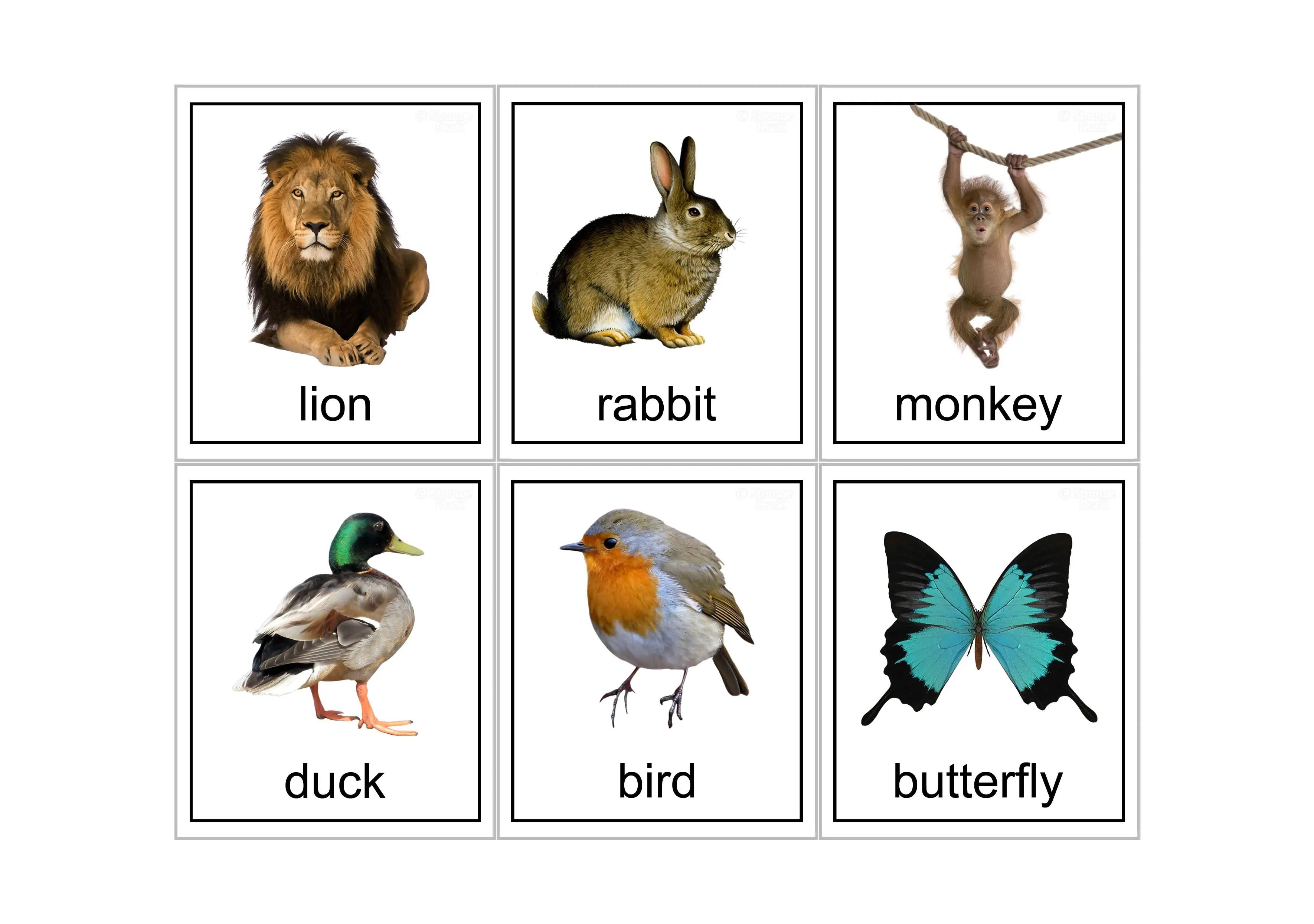 15 Animal Flash Cards