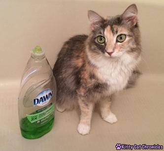 cat flea bath