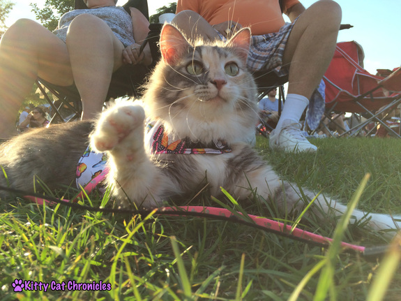 What is Cerebellar Hypoplasia? - Sophie, CH Cat, playing outside