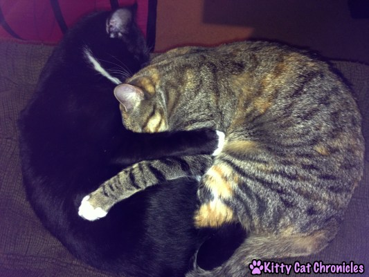 Delilah and Sampson, the Cuddling Cats